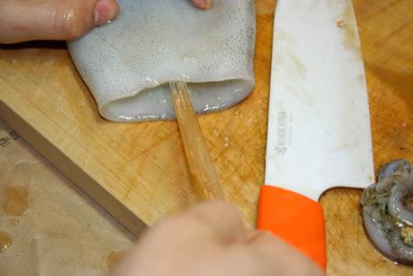 Нащупайте пальцами и найдите в мантии кальмара гладиус-хитиновую пластинку