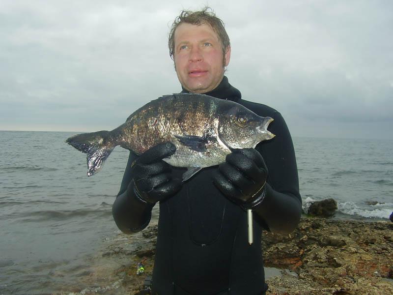 Морской карась-кантар, добытый на подводной охоте. Крым