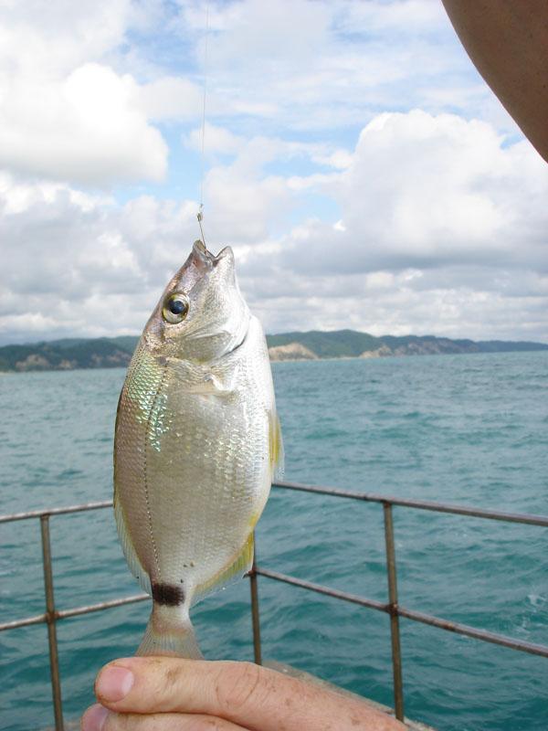 Абердин гонконг рыбный рынок фото числе первых