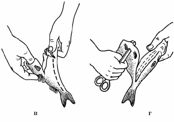 Рис. №2 Стадии разделки рыбы с острыми шипами на плавниках